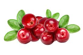 cranberry fruits
