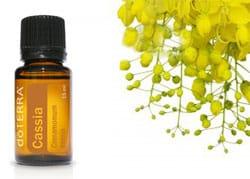 benefits cassia essential oil