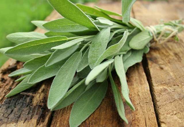 Health Benefits Of Sage, antioxidant impact