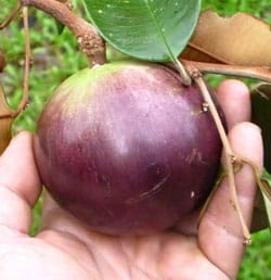 star apple health benefits